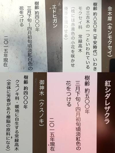 いわき市三島八幡神社 シダレザクラ 看板-horz-vert.jpg