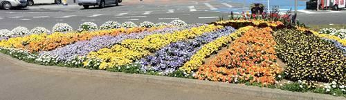 かみね公園 花畑.JPG