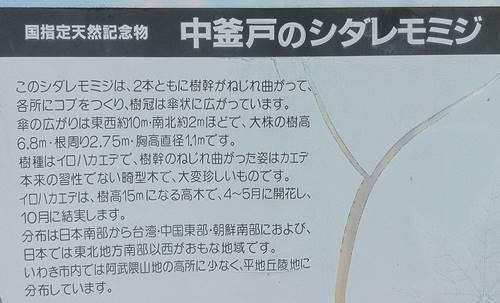 中釜戸 枝垂れモミジ 看板.JPG