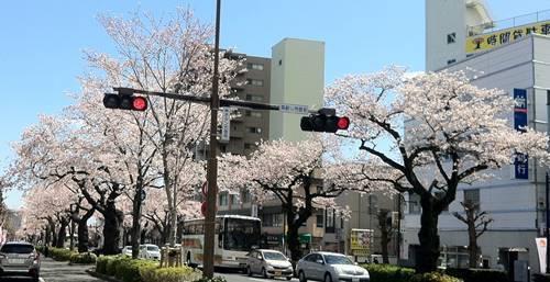 日立市 平和通り.JPG