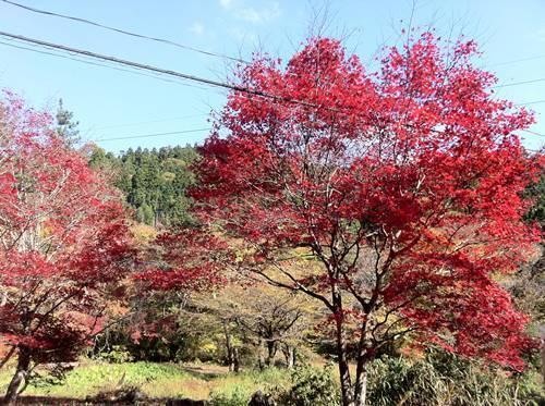 花園渓谷2.JPG