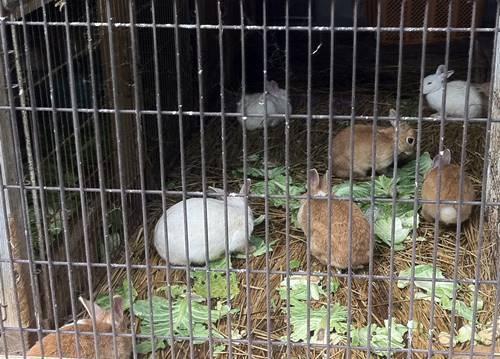 いわき市丸山公園 ウサギ.JPG