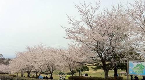 いわき市小名浜 三崎公園 (1).JPG