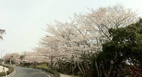 いわき市小名浜 三崎公園 (2).JPG
