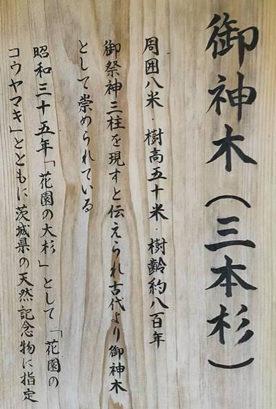 北茨城市 花園神社 三本杉 説明.jpg