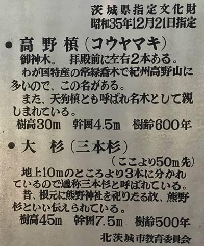 北茨城市 花園神社 御神木 詳細.jpg