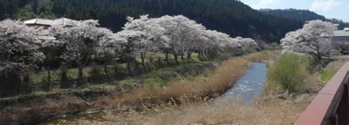 古殿町 桜2.JPG
