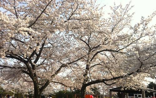 松ヶ岡公園.JPG