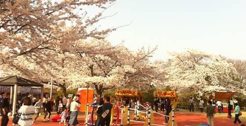 松ヶ岡公園(1).JPG