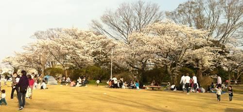 松ヶ岡公園(2).JPG
