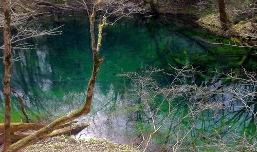 白神山地 沸壺の池.JPG