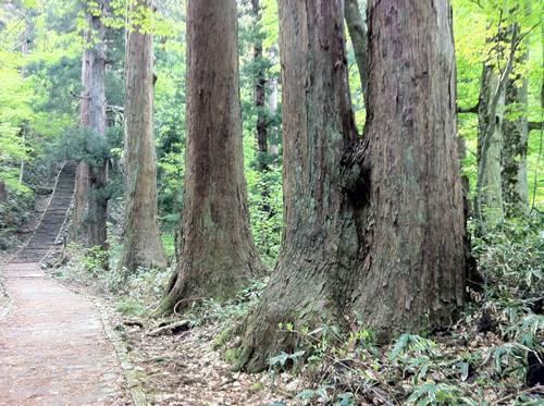 羽黒山 杉並木.JPG