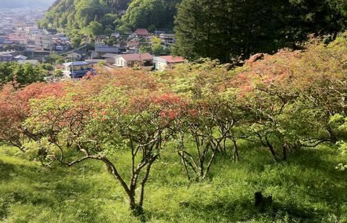 風呂山公園.JPG